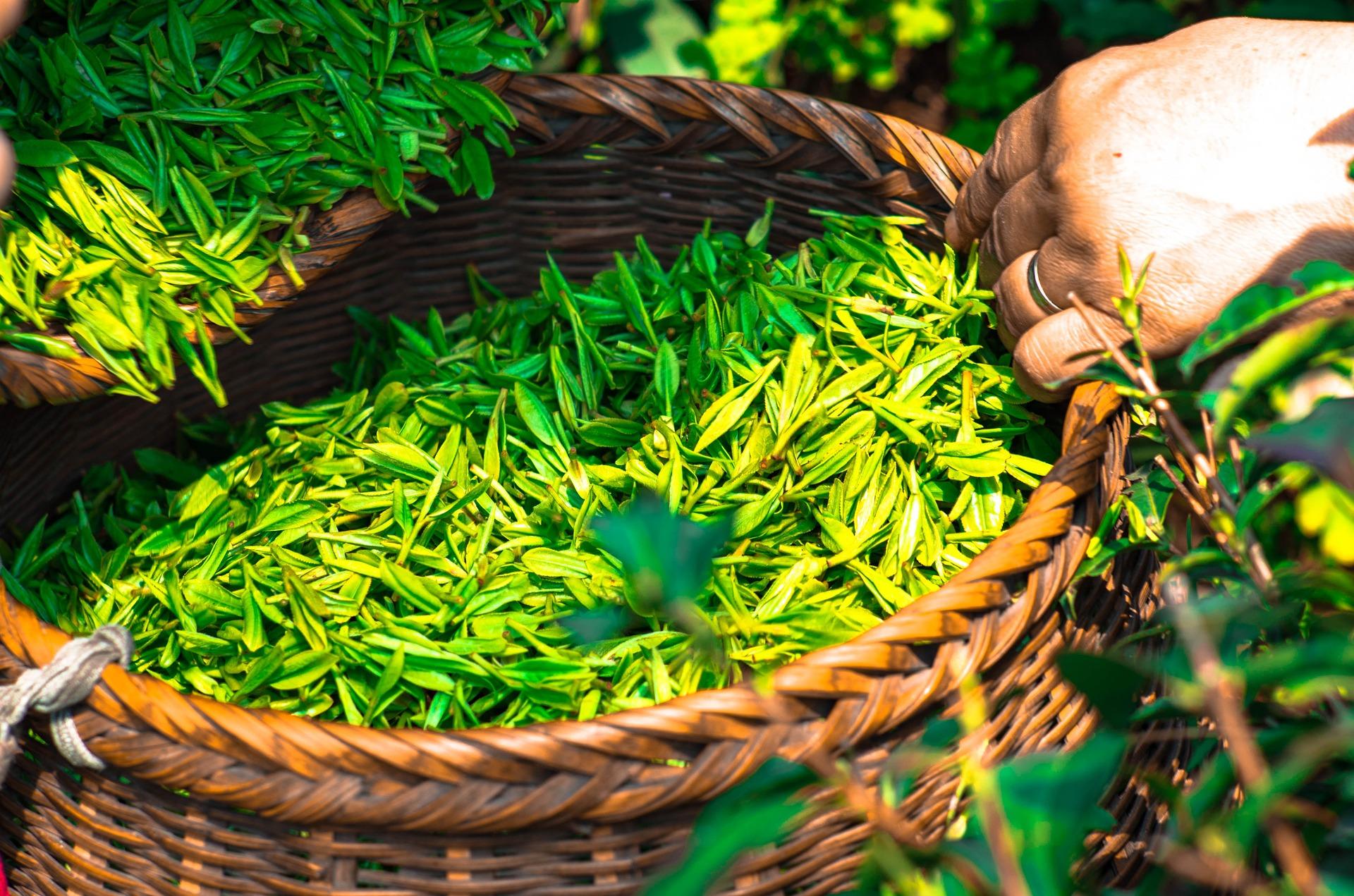 tea-1309015_1920
